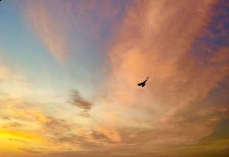 Sonnenuntergang Bird